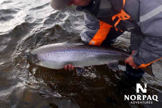 Salmon fly fishing - Catch and release