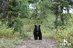 george-river-black-bear.jpg