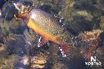 george-river-brook-trout.jpg